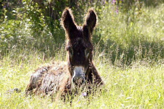 Chloe the donkey loves a cuddle