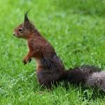 rainy days squirrel
