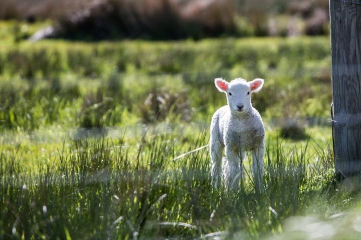 farm stays