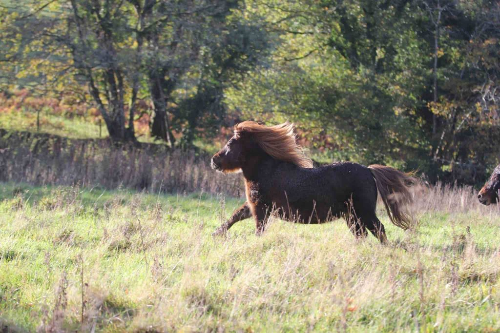 mini pony