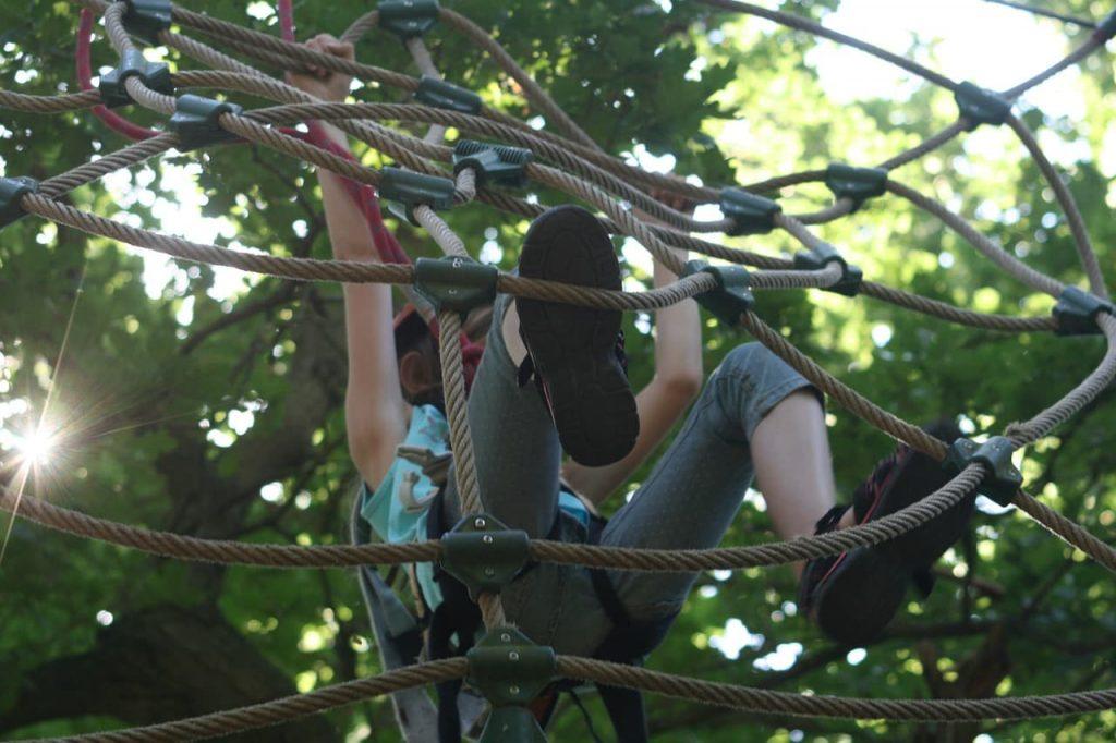climbing forest
