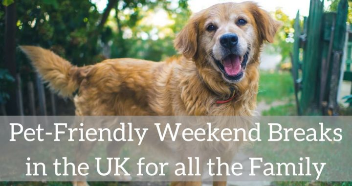 Pet Friendly Weekend Breaks in the UK for all the Family